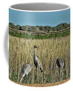 Feeding Greater Sandhill Cranes Coffee Mug