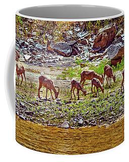 Coffee Mug featuring the photograph Feeding Mountain Sheep by Robert Bales