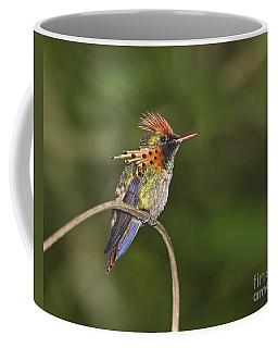 Feisty Little Fellow..  Coffee Mug