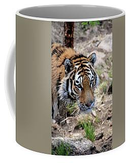 Feline Focus Coffee Mug