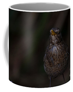 Female Blackbird Coffee Mug