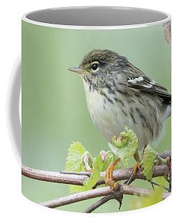 Female Blackpoll Coffee Mug