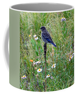 Female Bluebird Coffee Mug