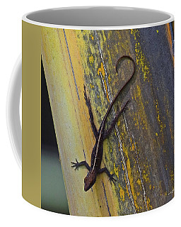 Coffee Mug featuring the photograph Female Brown Anole by Sally Sperry
