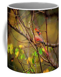 Female Cardinal #1 Coffee Mug