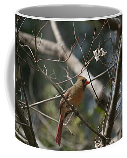 Female Cardinal 3 Coffee Mug
