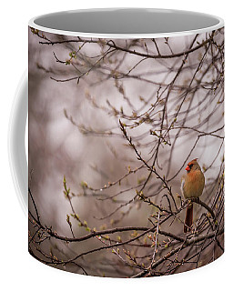 Coffee Mug featuring the photograph Female Cardinal In Spring 2017 by Terry DeLuco