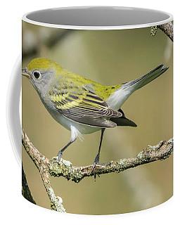 Female Chestnut-sided Warbler Coffee Mug