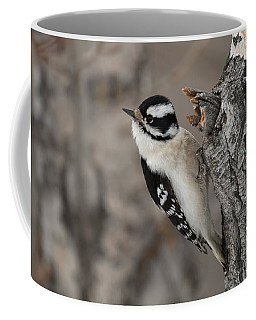Female Downey Woodpecker Coffee Mug