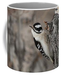 Female Downey Woodpecker Coffee Mug