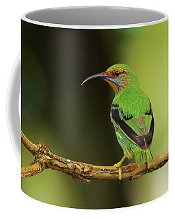 Female Green Honeycreeper At Trinidad's Asa Wright Coffee Mug