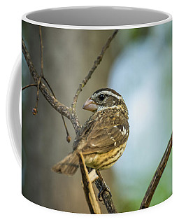 Female Grossbeak Looking Back Coffee Mug
