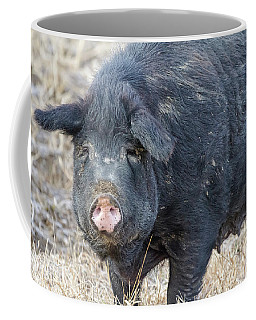 Coffee Mug featuring the photograph Female Hog by James BO Insogna
