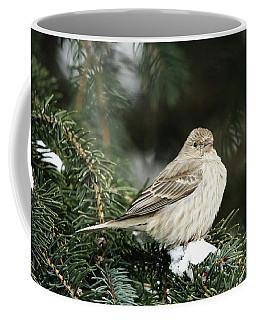 Female House Finch On Snow Coffee Mug