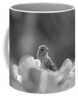 Female House Finch Perched In Black And White Coffee Mug