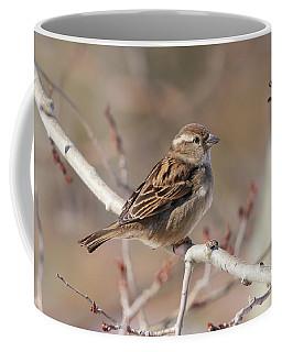 Female House Sparrow Coffee Mug