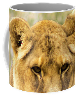 Coffee Mug featuring the photograph Female Lion by Ayasha Loya