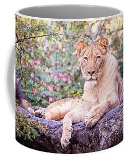 Female Lion Resting Coffee Mug by Stephanie Hayes