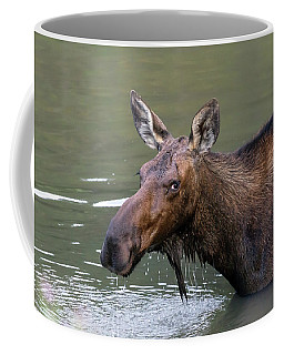 Coffee Mug featuring the photograph Female Moose Head by James BO Insogna