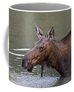 Coffee Mug featuring the photograph Female Moose Head Shot by James BO Insogna