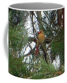 Female Northern Cardinal Coffee Mug
