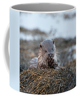 Female Otter Eating Coffee Mug