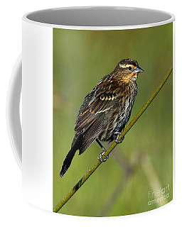 Female Red-winged Blackbird Coffee Mug by Myrna Bradshaw