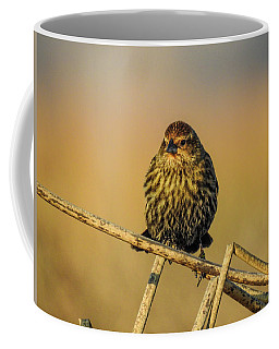 Female Red-winged Blackbird  Coffee Mug