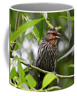 Female Redwinged Blackbird Coffee Mug