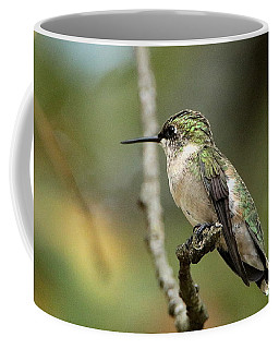Female Ruby-throated Hummingbird On Branch Coffee Mug