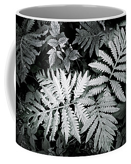Fern At Bald Rock Coffee Mug