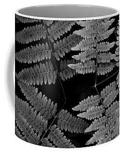Coffee Mug featuring the photograph Ferns by Alana Ranney