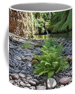 Ferns Along Banks Of Eagle Creek Coffee Mug