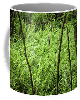 Ferns At Crowley Coffee Mug