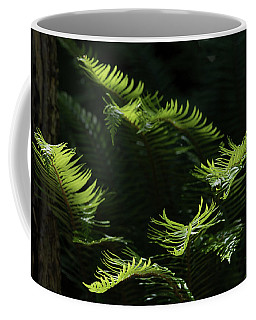 Ferns In The Forest Coffee Mug by Keith Boone