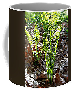 Coffee Mug featuring the photograph Fiddlehead Ferns by Joy Nichols