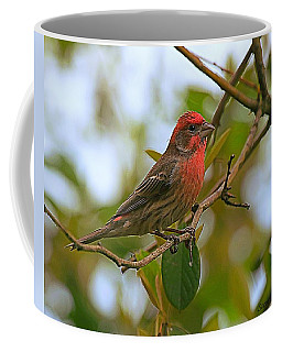 Finch Portraiture Coffee Mug