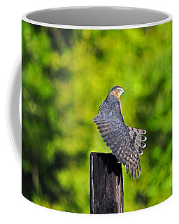 Coffee Mug featuring the photograph Fine Feathers by Al Powell Photography USA