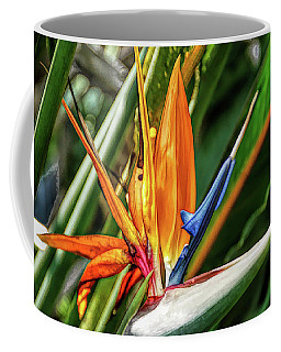 Coffee Mug featuring the photograph Fine Wine Cafe Bird Of Paradise by Aimee L Maher Photography and Art Visit ALMGallerydotcom
