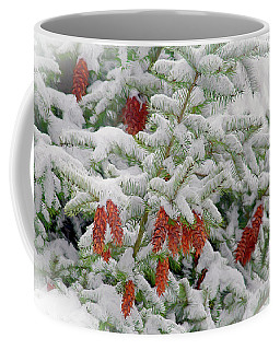 Coffee Mug featuring the photograph Fir Cones On White Photo Art by Sharon Talson