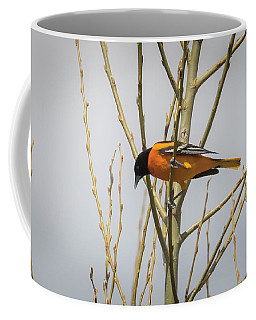 Coffee Mug featuring the photograph First Baltimore Oriole Of The Year  by Ricky L Jones