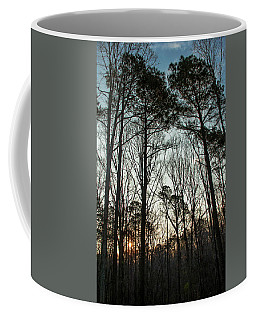 Coffee Mug featuring the photograph First Day Of Spring, North Carolina Pines by Jim Moore