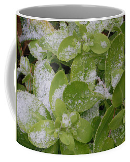 Coffee Mug featuring the photograph First Dusting Of Snow Plant by Rockin Docks Deluxephotos