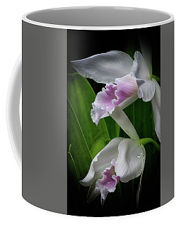 First Orchid At The Conservatory Of Flowers Coffee Mug