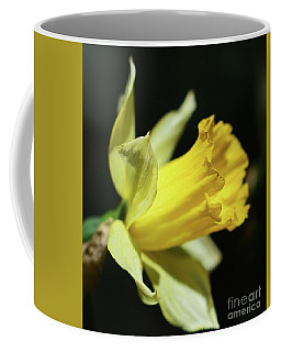 Coffee Mug featuring the photograph First Sign Of Spring by Cindy Manero