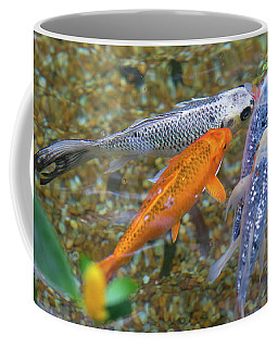Coffee Mug featuring the photograph Fish Fighting For Food by Raphael Lopez