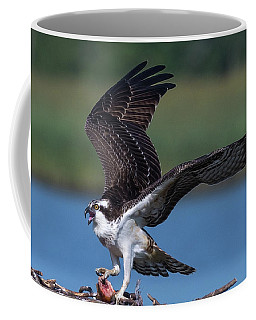 Coffee Mug featuring the photograph Fish For The Osprey by Cindy Lark Hartman