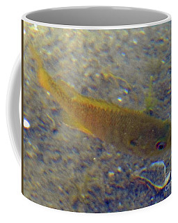 Fish Sandy Bottom Coffee Mug