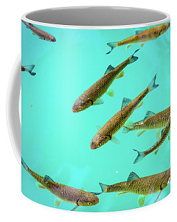 Fish School In Turquoise Lake - Plitvice Lakes National Park, Croatia Coffee Mug