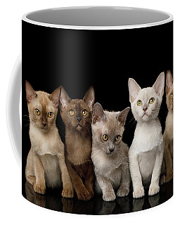 Five Burmese Kittens Coffee Mug